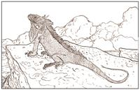 Adult - Iguana Colorable Placemat