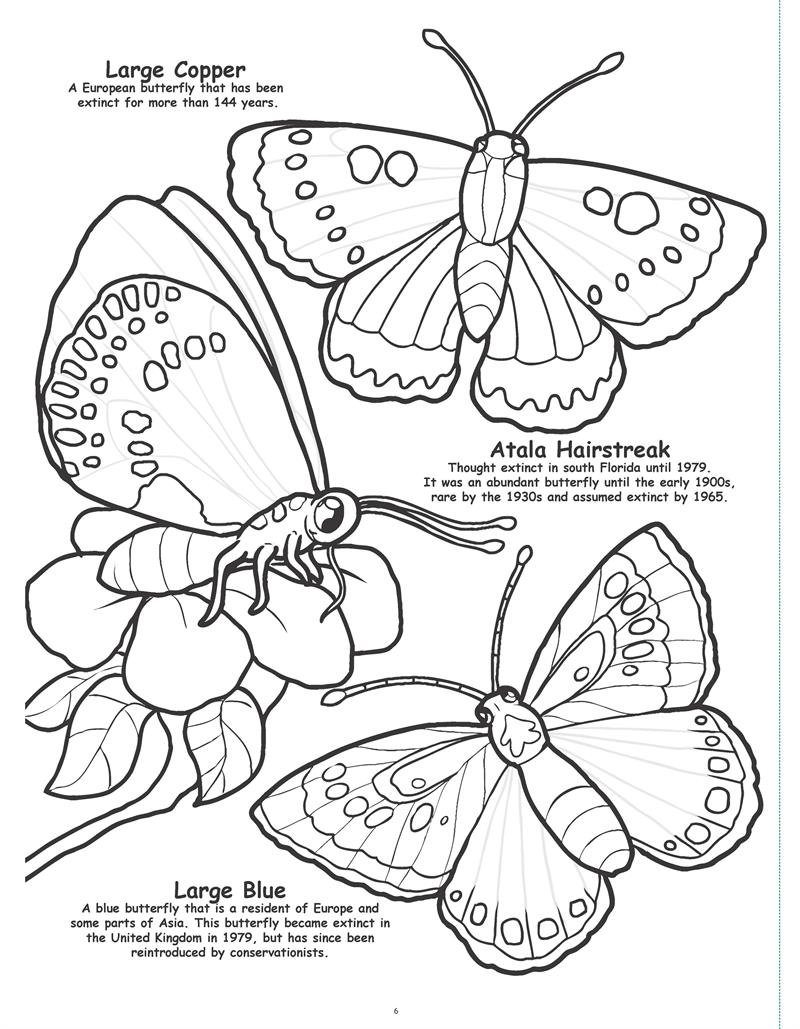 Coloring Books | Butterflies and Birds Really Big Giant Coloring Book