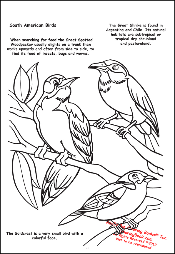 Coloring Books | Butterflies and Birds Giant Tablet