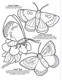Butterflies and Birds Really Big Coloring Book - 6