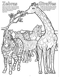Zoo Animals Really Big Coloring Book - Zebra Giraffes