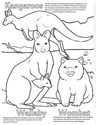 Zoo Animals Really Big Coloring Book - Kangaroo Wallaby
