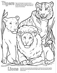 Zoo Animals Really Big Coloring Book - Tigers Lions