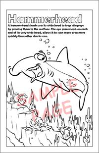 Hammerhead coloring page