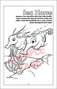 Sea horse coloring page